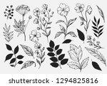 leaves set. hand drawn... | Shutterstock .eps vector #1294825816
