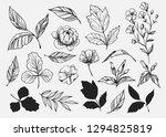 leaves set. hand drawn... | Shutterstock .eps vector #1294825819
