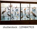 3 september 2018  vienna ... | Shutterstock . vector #1294847923