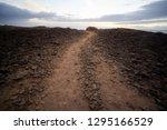 cactus desert sunset in...   Shutterstock . vector #1295166529