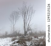 Fog And Snow. Tall Winter Trees ...