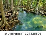 Mangrove Forests   Swamp   Wit...