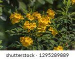 wild flowers are flowers that...   Shutterstock . vector #1295289889