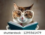 cat in glasses holding a... | Shutterstock . vector #1295561479