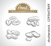 peanut. hand drawn collection... | Shutterstock .eps vector #1295647849