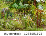 landscape with various flowers... | Shutterstock . vector #1295651923