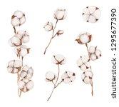 watercolor cotton flowers set....   Shutterstock . vector #1295677390