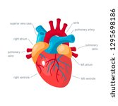 human heart concept. vector... | Shutterstock .eps vector #1295698186