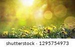 sunbeams over a meadow in spring | Shutterstock . vector #1295754973