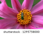 tiny green insect collecting... | Shutterstock . vector #1295758000