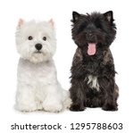 west highland white terrier and ... | Shutterstock . vector #1295788603
