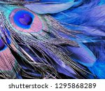 Beautiful Color Of Bird ...