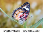 Stock photo butterfly leopard lacewing butterfly cethosia cyane lacewing butterfly male in tropical 1295869630