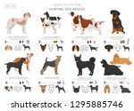 hunting dogs collection... | Shutterstock .eps vector #1295885746