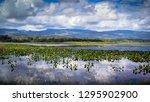 pantanal marimbus  waters of... | Shutterstock . vector #1295902900