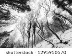 trees with snow in winter | Shutterstock . vector #1295950570