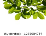 tree branch isolated on white... | Shutterstock . vector #1296004759