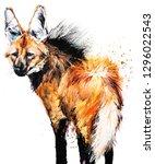 guara wolf. mane wolf. tropical ... | Shutterstock . vector #1296022543