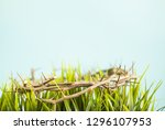 crown of thorns and grass... | Shutterstock . vector #1296107953