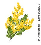 branch of mimosa isolated on... | Shutterstock .eps vector #1296108073