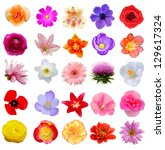 america planing flowers in... | Shutterstock . vector #129617324