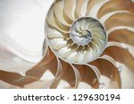 nautilus shell section | Shutterstock . vector #129630194
