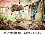 worker digs soil with shovel in ...