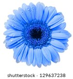Stock photo gerbera flower with water drop isolated on white background 129637238