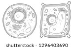 animal cell and plant cell line | Shutterstock .eps vector #1296403690