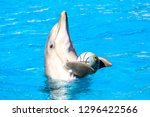 Dolphin Holding A Ball With His ...