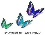 Stock photo colorful butterflies 129649820
