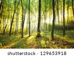 Sun Beams Pour Through Trees I...