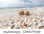 seashells shelling activity on... | Shutterstock . vector #1296579100