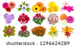 collection of flowers marigold  ... | Shutterstock . vector #1296624289