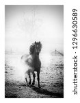 single running horse with... | Shutterstock . vector #1296630589