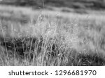 dry spikelets sunny autumn day... | Shutterstock . vector #1296681970