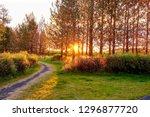 sunrise shiny over the tree in... | Shutterstock . vector #1296877720