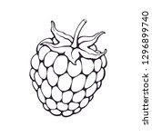 vector illustration. hand drawn ... | Shutterstock .eps vector #1296899740