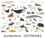 tundra biome. terrestrial... | Shutterstock .eps vector #1297003363