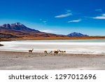 summer wide mountain bolivian... | Shutterstock . vector #1297012696