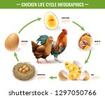 chicken life cycle stages... | Shutterstock .eps vector #1297050766