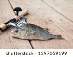 freshwater perch and fishing... | Shutterstock . vector #1297059199