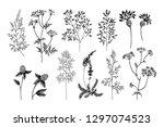 wild and herbs plants set.... | Shutterstock .eps vector #1297074523