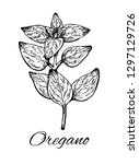 oregano hand drawn illustration.... | Shutterstock .eps vector #1297129726