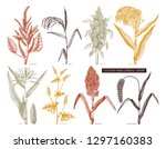 hand drawn cereal crops set....   Shutterstock .eps vector #1297160383