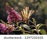 beautiful butterfly on... | Shutterstock . vector #1297233103