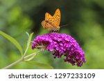 beautiful butterfly on... | Shutterstock . vector #1297233109