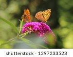 two butterflies on butterfly... | Shutterstock . vector #1297233523