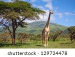 giraffe walking through the... | Shutterstock . vector #129724478