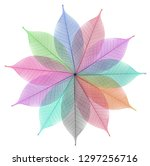 skeleton leaf abstract... | Shutterstock . vector #1297256716